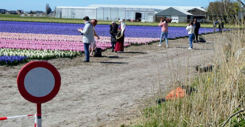 Verbodsborden bij bloemenvelden werken niet
