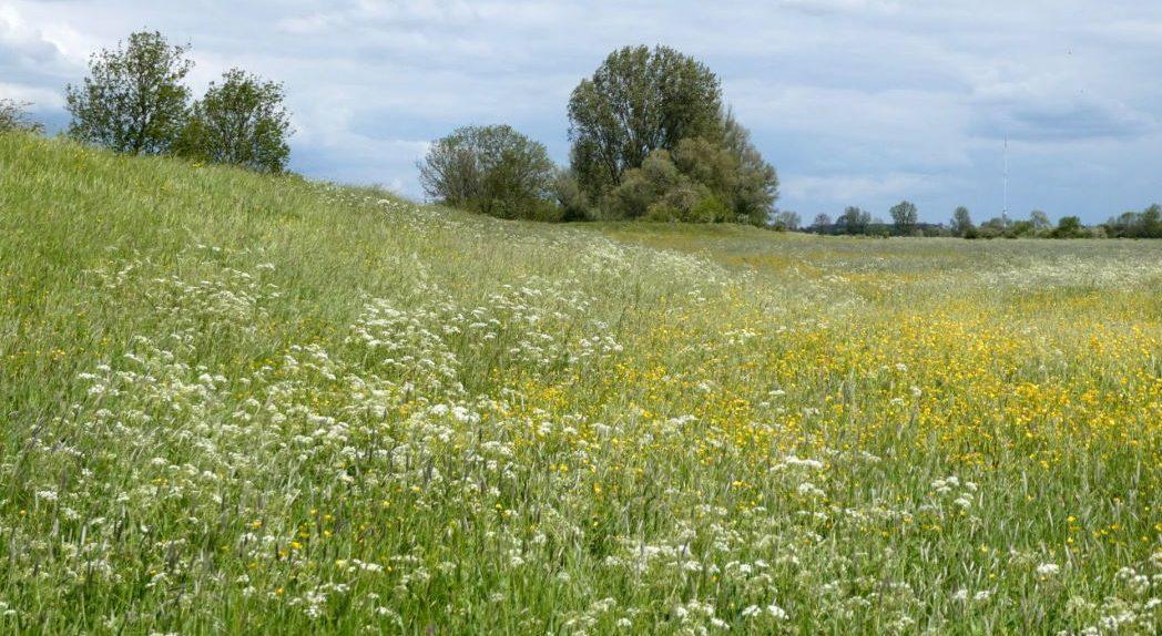 Bloemrijke graslanden