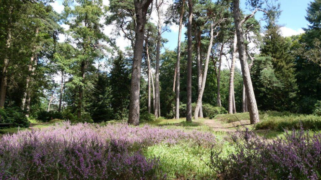 Park Driebergen