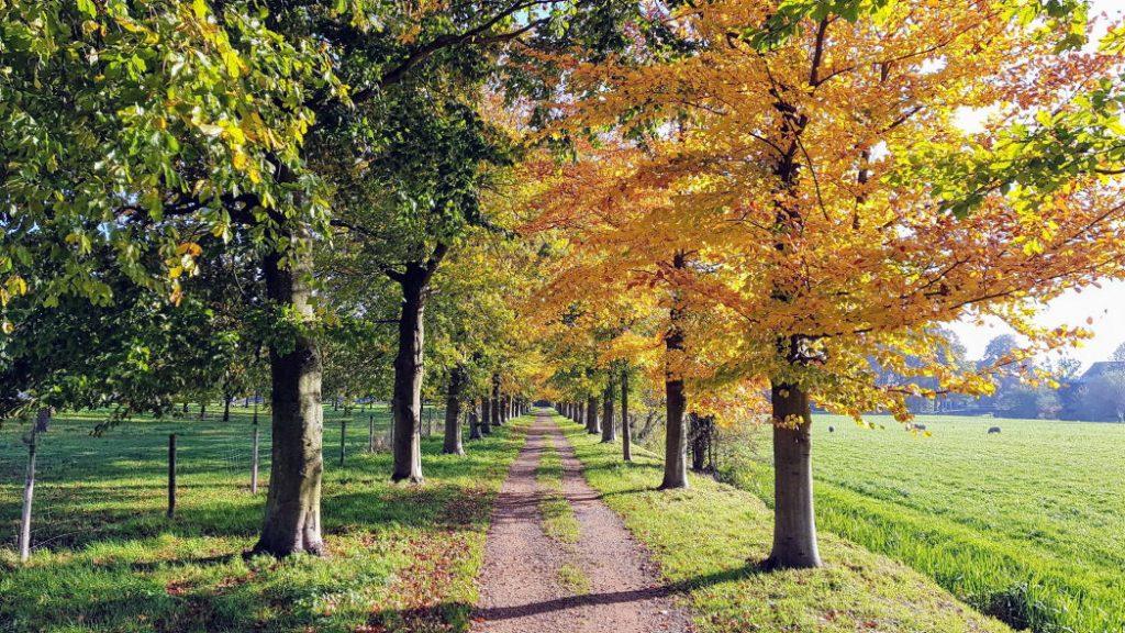 Laan in herfstkleuren
