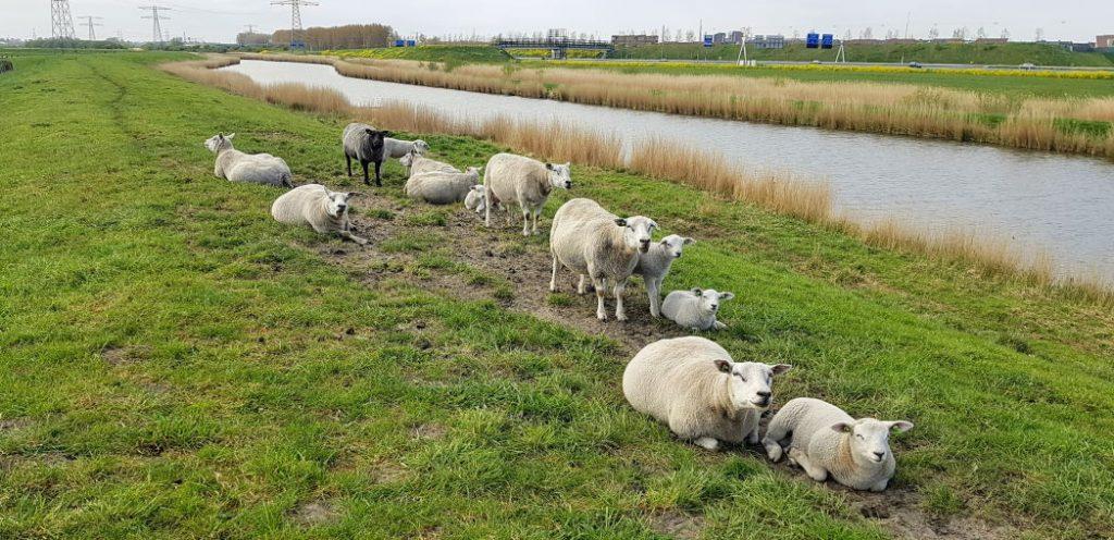 Sint Aagtendijk
