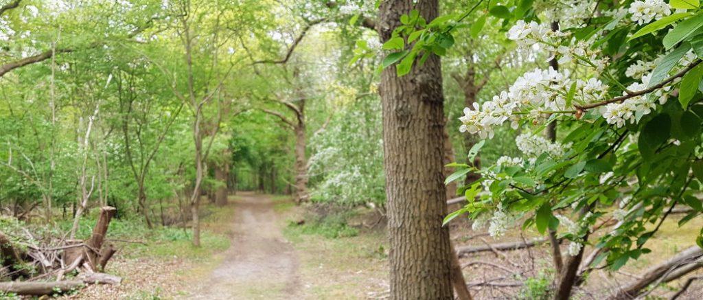 Witte bloemetjes in het bos