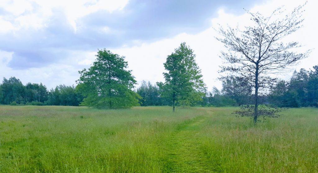 Wandelpad landgoed Groot Abbelaar